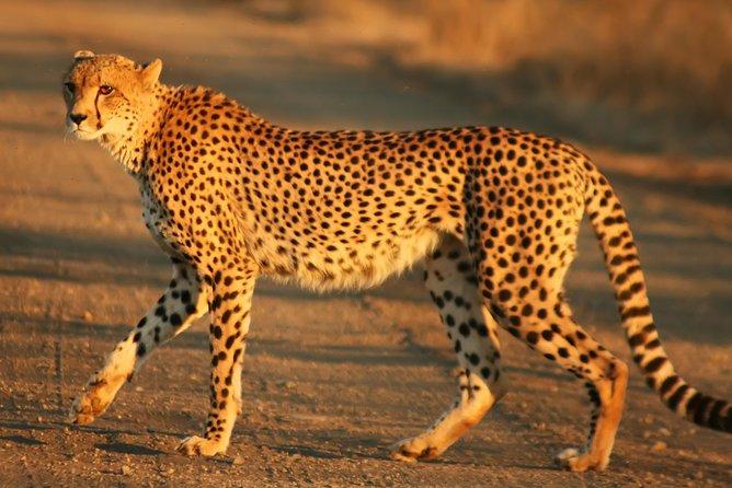 Cape town Private Tour , Inverdoorn Game reserve Safari