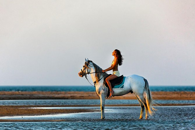 Horse and Camel Riding - Hurghada