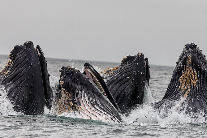 Whale Watching & Wildlife Viewing Excursion photo 3