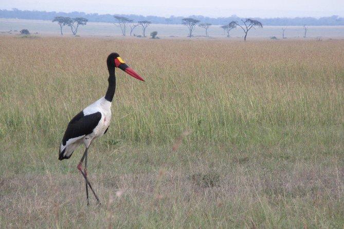 , , TANZANIA