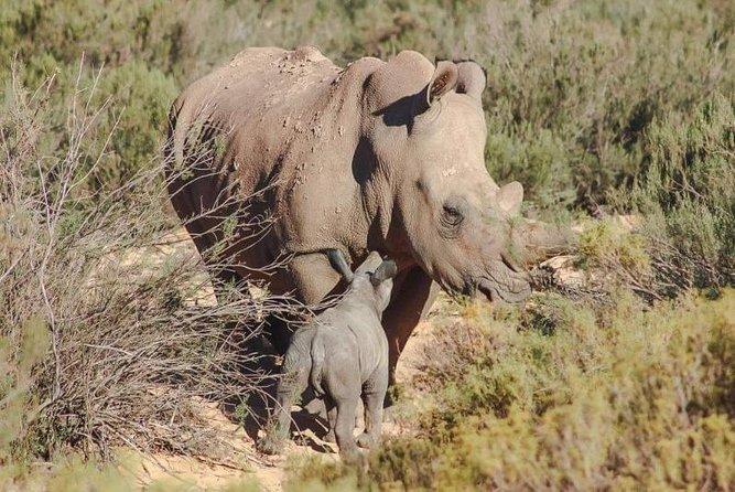 Wildlife and Safari Tour