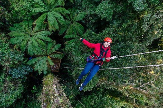 Thrilling Zipline Adventure in Rotorua's Native Forest & Tauranga Scenic Tour