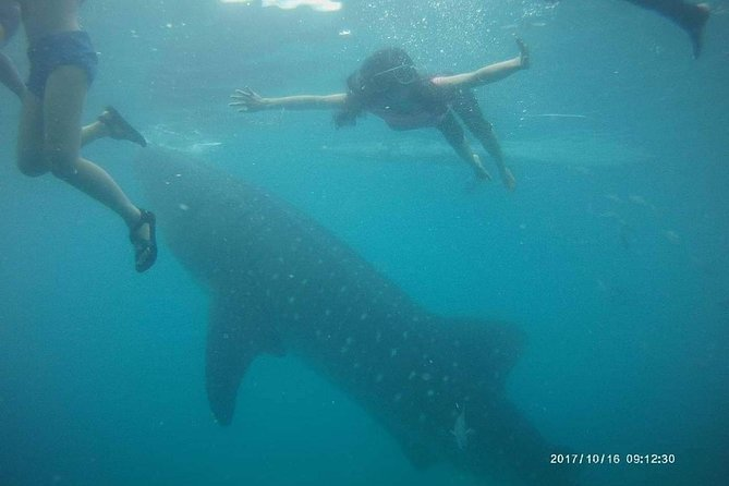 Whale Shark in Oslob photo 3