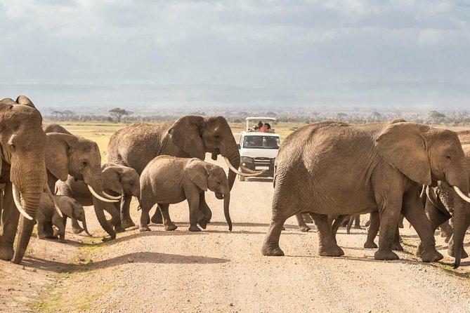 4 Days Amboseli Luxury Safari