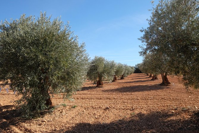 Wine tour and olive oil