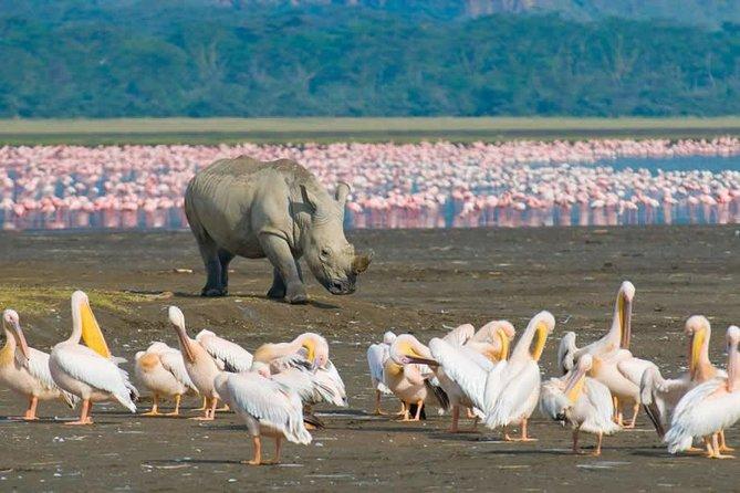 7 Days Amboseli, Aberdares, Lake Nakuru & Masai Mara Safari