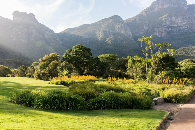 Wine Farms in Constantia and World Famous Kirstenbosch Gardens photo 6