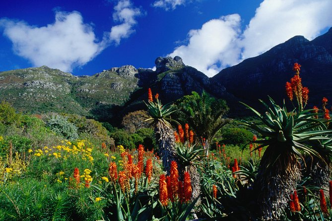 Wine Farms in Constantia and World Famous Kirstenbosch Gardens photo 2