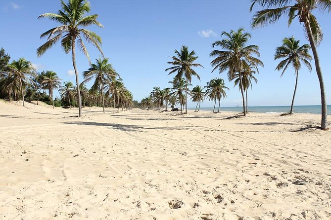 Arrival Private Transfer from Fortaleza Airport FOR to Fortaleza by Minivan