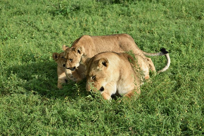 2 Days Murchison Falls Safari in Uganda