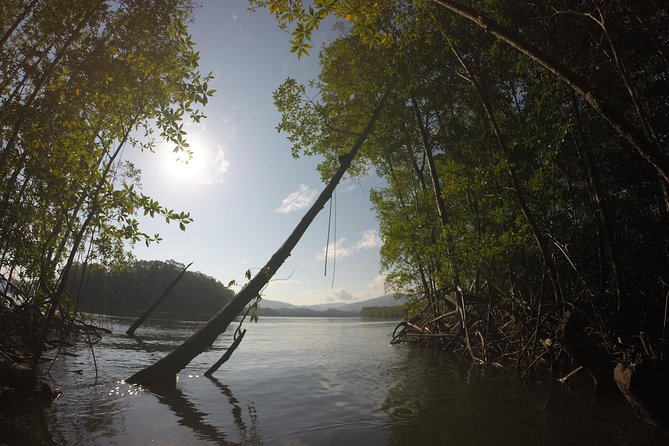 Mangrove Birdwatching Journey