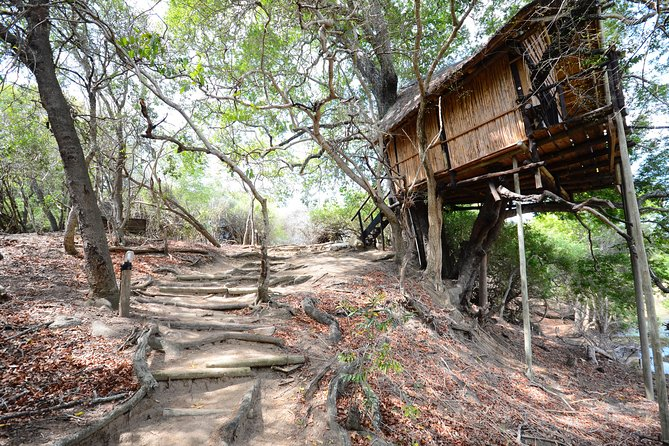 3 Day Treehouse Kruger National Park Safari