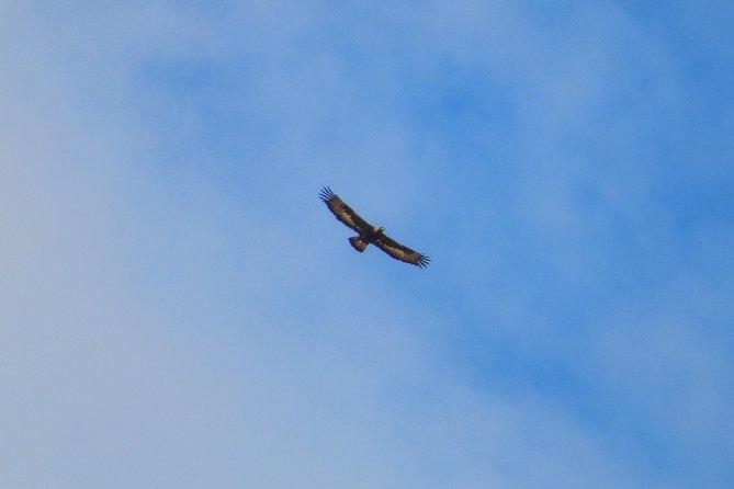 Gaskan cruise - Golden Eagles!