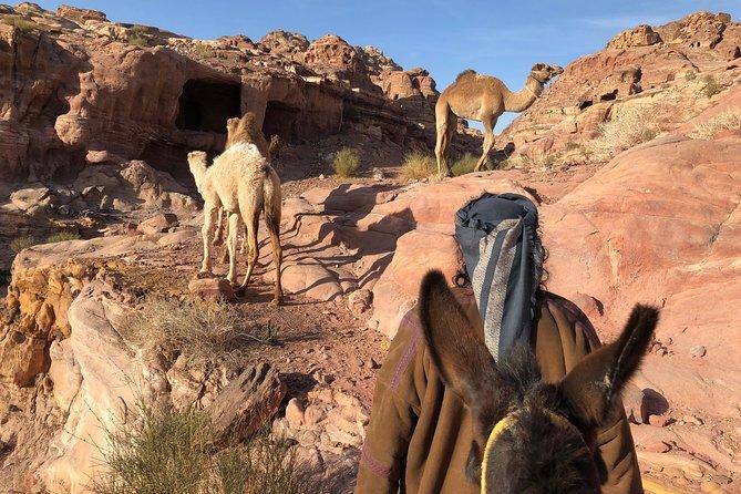 Bedouin Experience Petra
