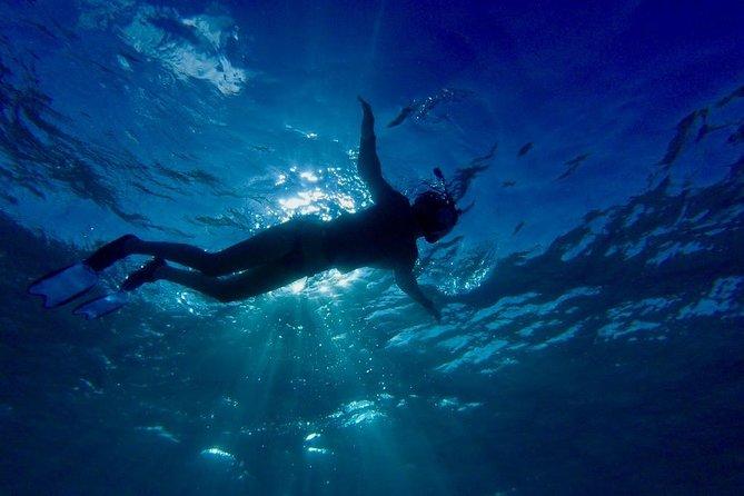 Buccoo Reef and Nylon Pool Adventure