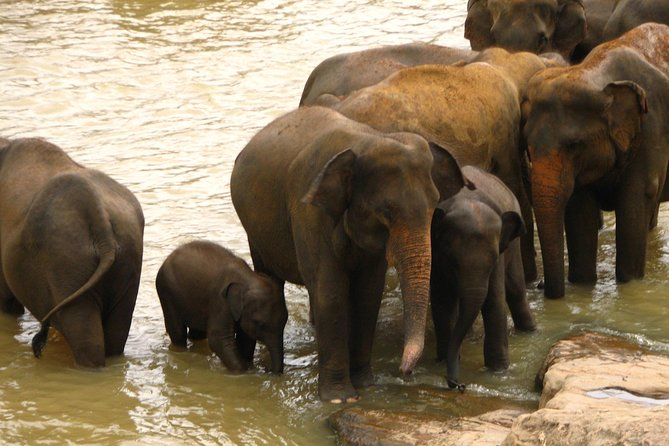 All inclusive Private safari at Wilpattu National park from Negombo photo 2