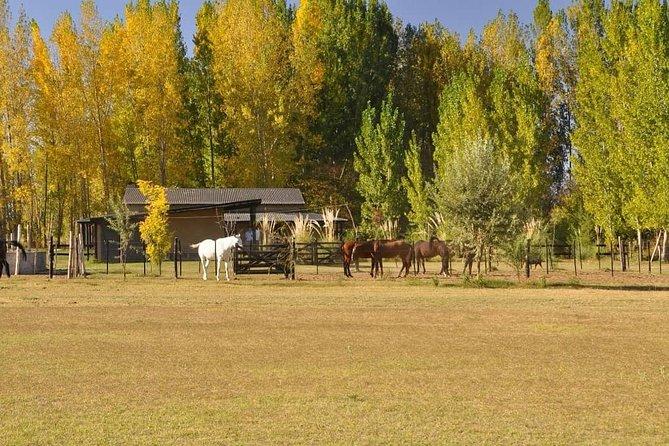 """Full day at """"La chelita"""", Uco Valley, Mendoza."""