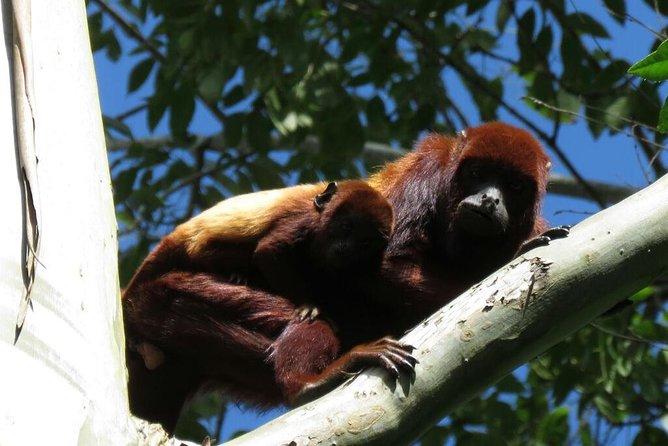 Otun Quimbaya wildlife sanctuary