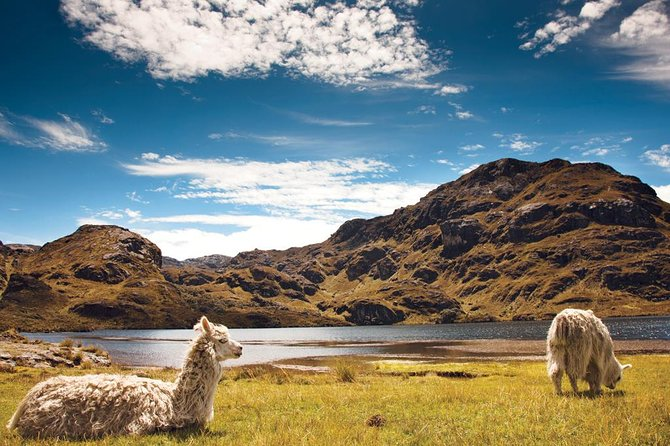 Private Cajas National Park Full Day Tour