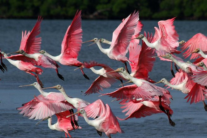 Birding Photography Boat Tour - See the Amazing Birds of Rookery Bay! photo 4