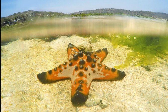 A Delightful Village With Beautiful Starfish Tour