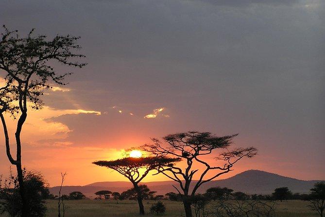 Sun Set at Tarangire National Park