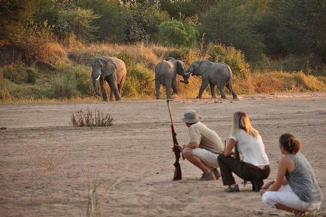 Ruaha National Park 4days Adventure Trip