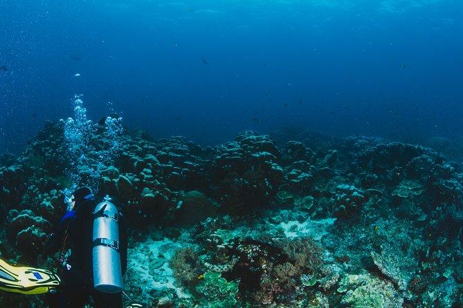 Scuba Diving in Santorini - Two Dives (same day)