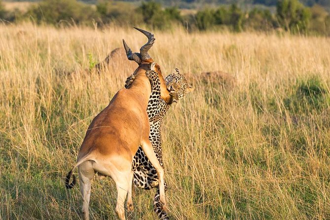 5 days / 4 nights Luxury Safari