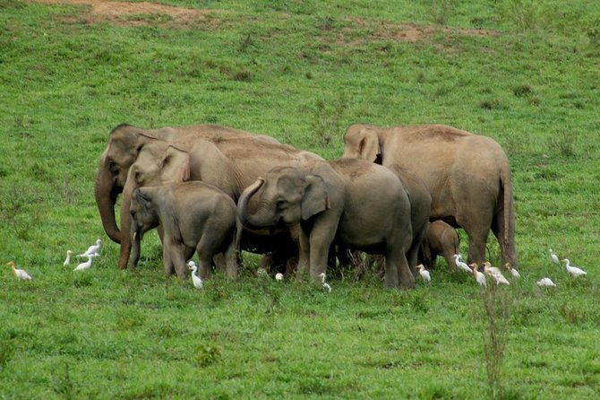 Kui Buri half day safari from Hua Hin (Private trip)