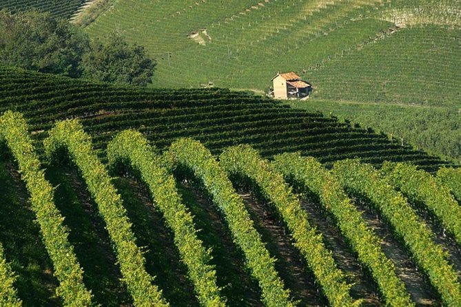 Wine Tour Barolo from Milan photo 2