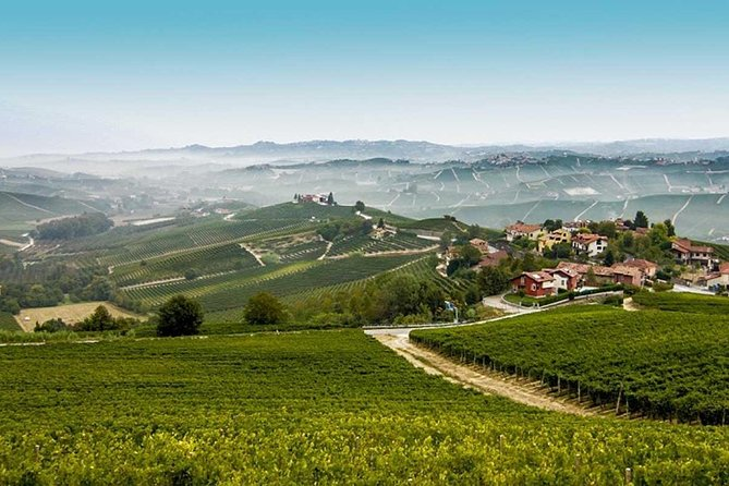 Wine Tour Barolo from Milan photo 7