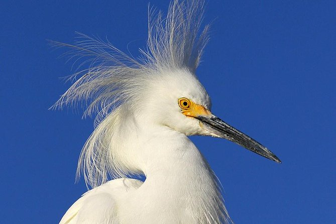 Birding Photography Boat Tour - See the Amazing Birds of Rookery Bay! photo 7