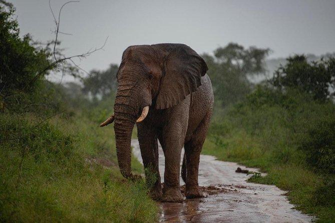 3-Day Wildlife Safari Tour