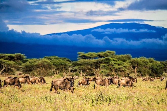 6 days Safari - Northbound Wildlife Migration (July to October only)