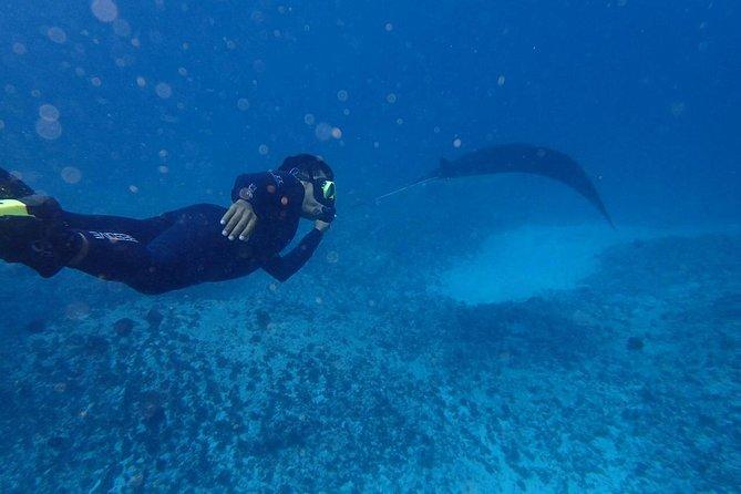 Bali Penida Snorkeling Experience with Manta Ray