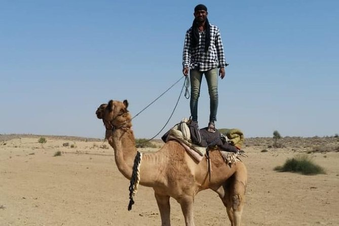Raj camel safari in Jaisalmer