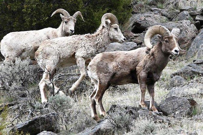 Three-Day Private Tour of Yellowstone & Grand Teton National Parks