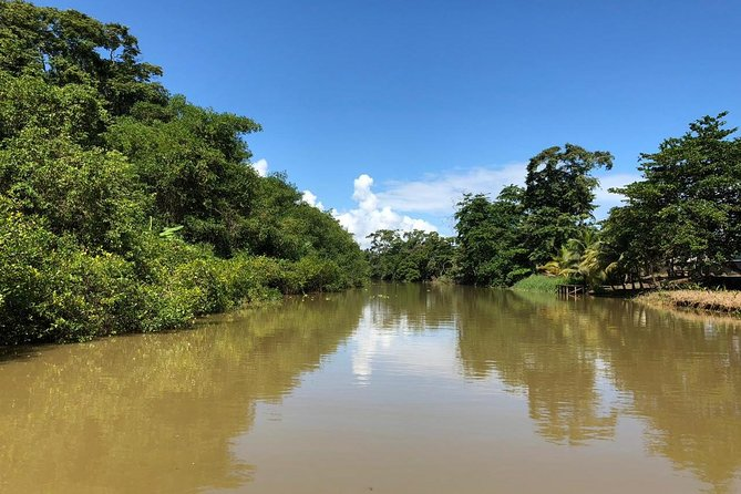 Nature History Tour. Tortuguero Canal and Cahuita National Park Walk. Shore Excursion from Puerto Limon