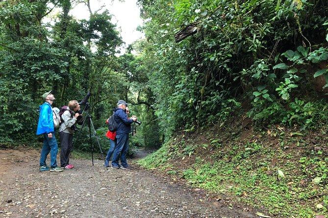 Guided walk of the Monteverde Reserve