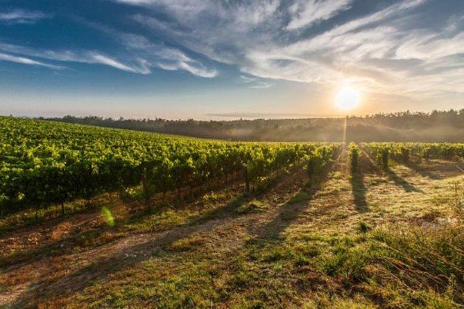 Excursión privada: Región vinícolas de Valle de Uco