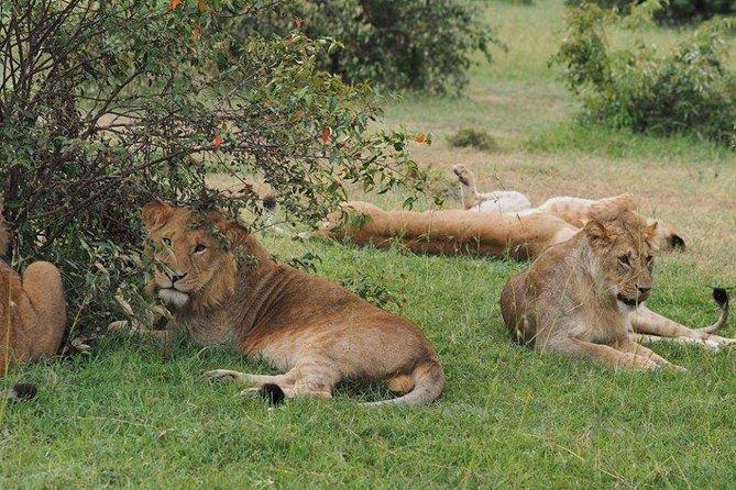 5 Days Migration Safari