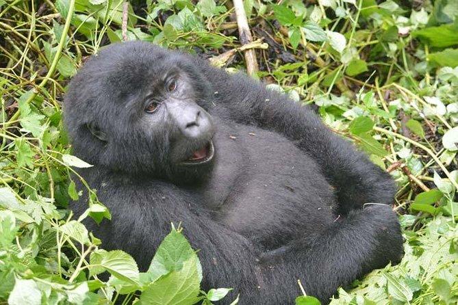 5 days Gorilla tracking Bwindi and Chimpanzee ( minimum 2 persons )