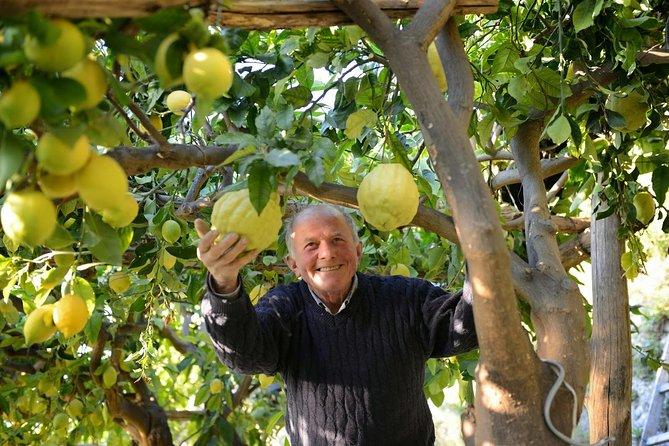 Amalfi Lemon Tour Experience
