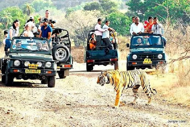 Ranthambore Wildlife Safari with Tickets & Transfer Options