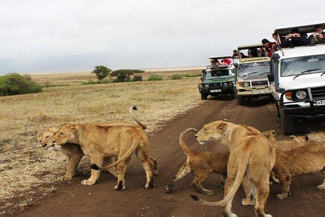 7 Days Tanzania Safari With Cultural Insights