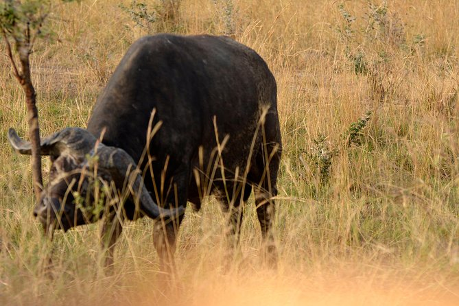 3 days Murchison falls and Ziwa Rhinos safari photo 10
