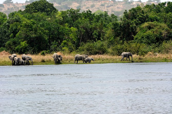 3 days Murchison falls and Ziwa Rhinos safari photo 4