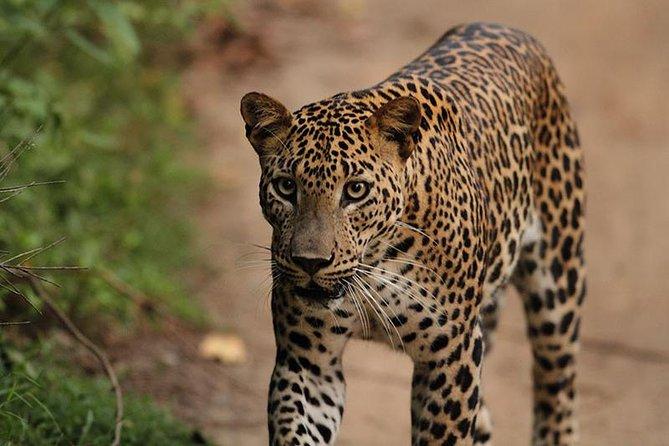 Morning safari in Kumana National Park