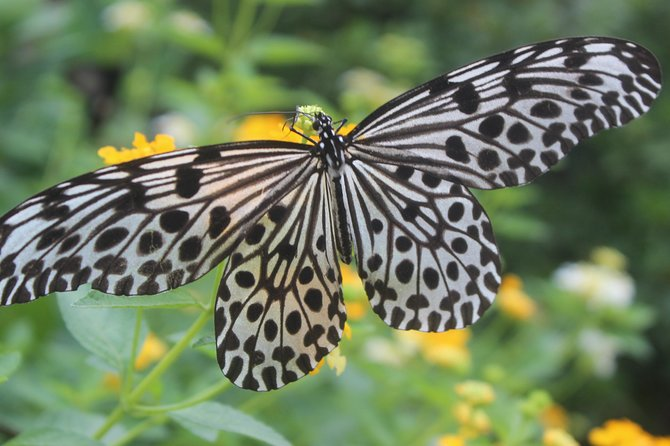 Kemenuh Butterfly Park and Blangsinga River Club